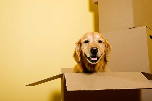 Overseas Pet Relocation Services